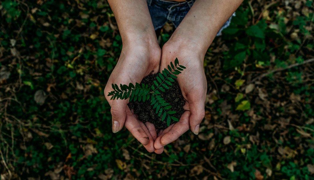 Stekje van plant in handen gedragen