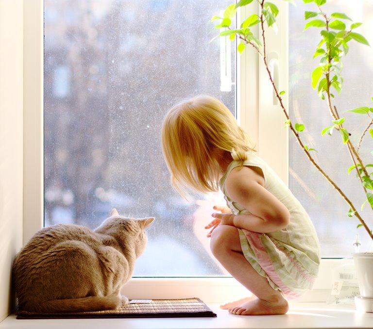 Girl and a cat next to an aluminium window